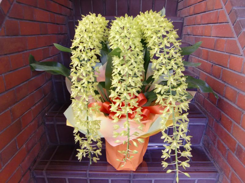 画像1: 蘭鉢・花鉢  0-2 (1)