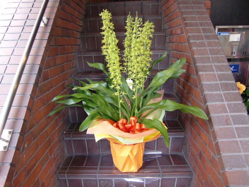 画像1: 蘭鉢・花鉢  0-3 (1)