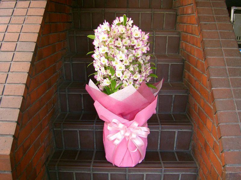 画像1: 蘭鉢・花鉢  0-4 (1)
