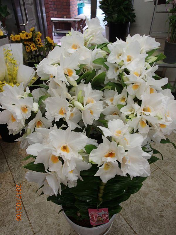 画像1: 蘭鉢・花鉢  0-6 (1)