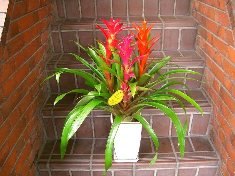 画像1: 蘭鉢・花鉢  0-7 (1)