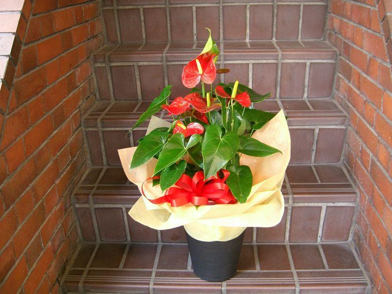 画像1: 蘭鉢・花鉢  0-8 (1)